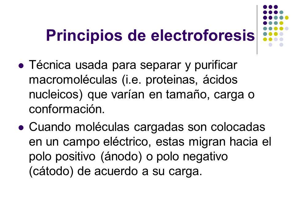 Principios de electroforesis Técnica usada para separar y purificar macromoléculas (i.e.