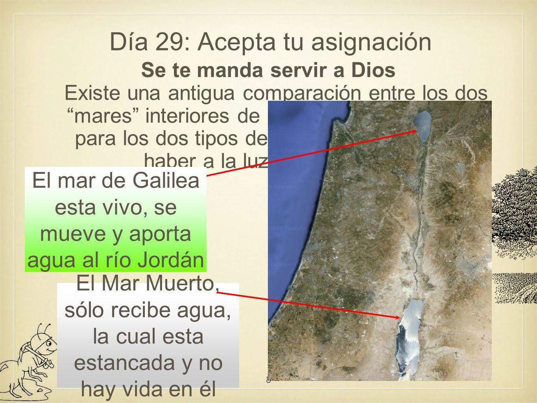 Día 29: Acepta tu asignación Nuestro servicio y la eternidad Allí daremos cuenta a Dios por lo que hemos aportado en la tierra.