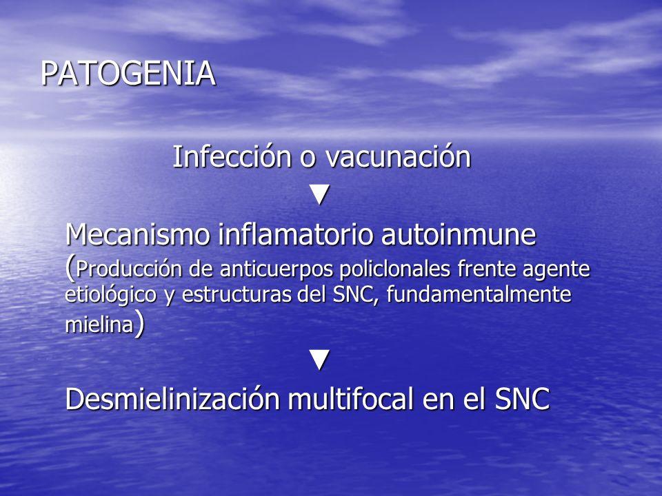 PATOGENIA Infección o vacunación Mecanismo inflamatorio autoinmune ( Producción de anticuerpos policlonales frente agente etiológico y estructuras del
