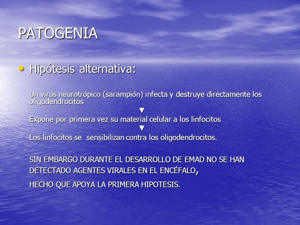 PATOGENIA Hipótesis alternativa: Hipótesis alternativa: Un virus neurotrópico (sarampión) infecta y destruye directamente los oligodendrocitos Expone