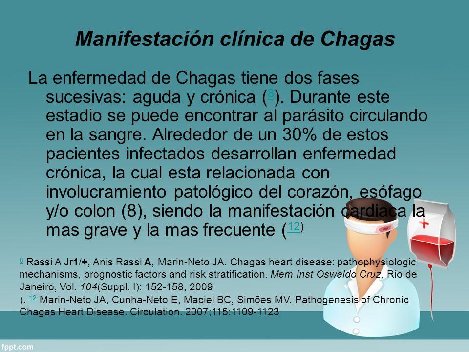 Manifestación clínica de Chagas La enfermedad de Chagas tiene dos fases sucesivas: aguda y crónica ( 8 ). Durante este estadio se puede encontrar al p