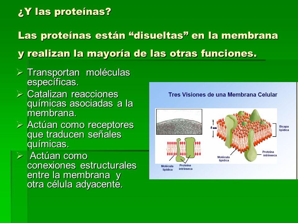 ¿Y las proteínas.