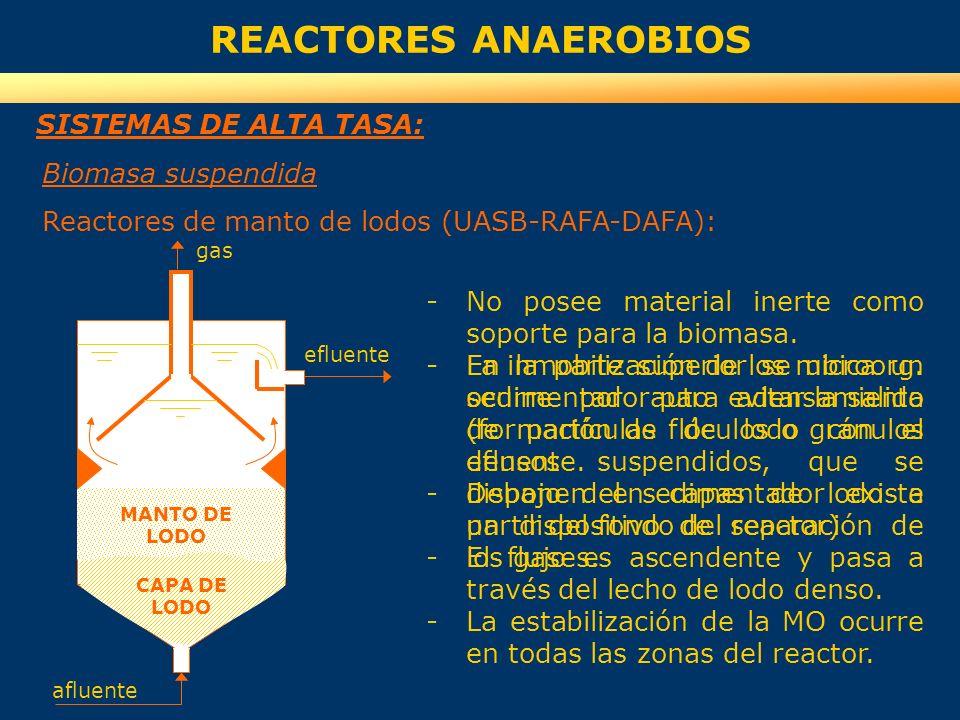 REACTORES ANAEROBIOS SISTEMAS DE ALTA TASA: Biomasa suspendida Reactores de manto de lodos (UASB-RAFA-DAFA): -No posee material inerte como soporte pa