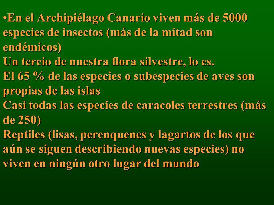 En el Archipiélago Canario viven más de 5000 especies de insectos (más de la mitad son endémicos) Un tercio de nuestra flora silvestre, lo es. El 65 %