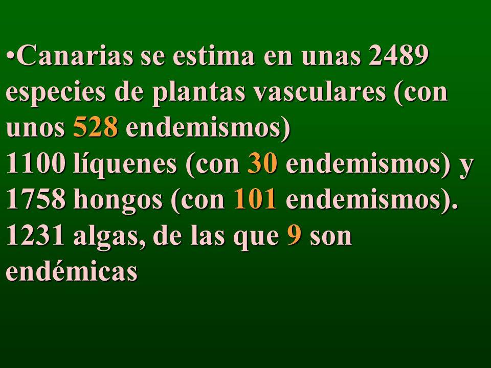 Canarias se estima en unas 2489 especies de plantas vasculares (con unos 528 endemismos) 1100 líquenes (con 30 endemismos) y 1758 hongos (con 101 ende