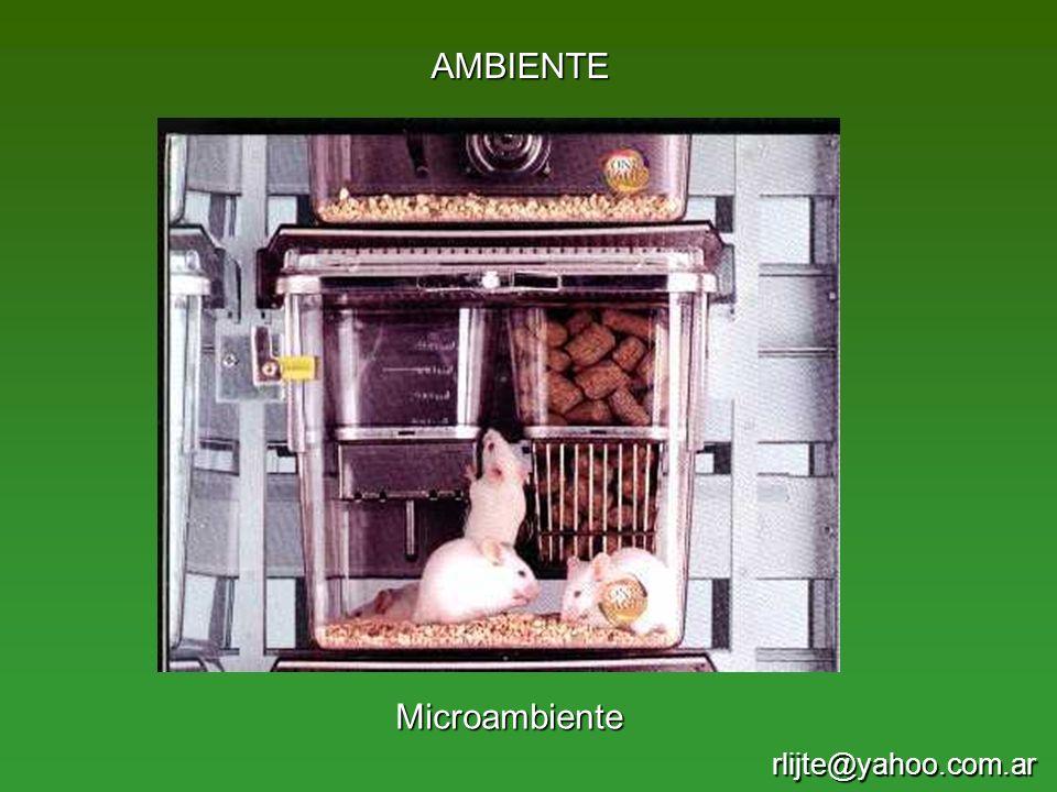 AMBIENTE Microambiente rlijte@yahoo.com.ar