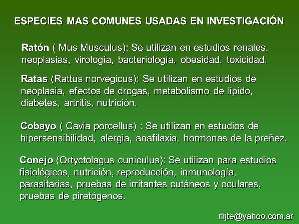 Ratón ( Mus Musculus): Se utilizan en estudios renales, neoplasias, virología, bacteriología, obesidad, toxicidad. ESPECIES MAS COMUNES USADAS EN INVE