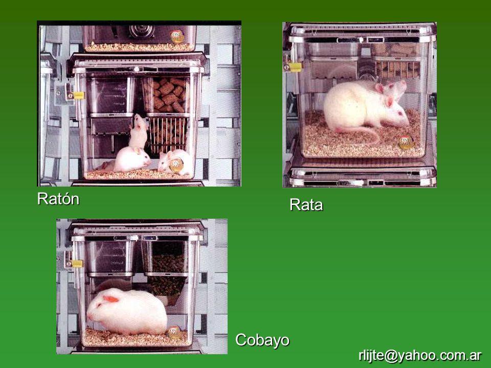 Ratón Rata Cobayo rlijte@yahoo.com.ar