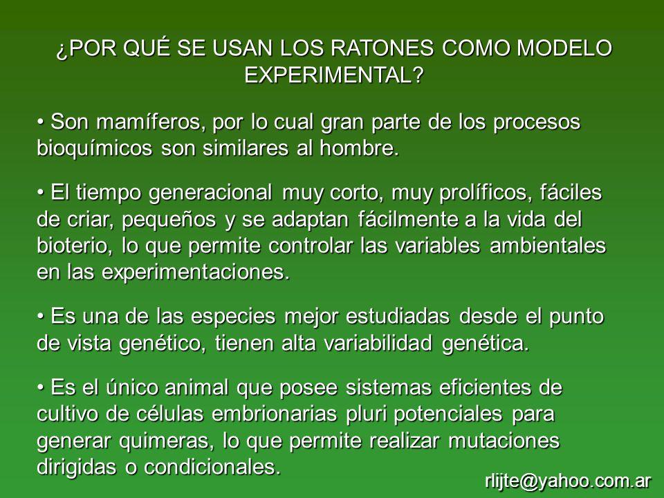 ¿POR QUÉ SE USAN LOS RATONES COMO MODELO EXPERIMENTAL? Son mamíferos, por lo cual gran parte de los procesos bioquímicos son similares al hombre. Son
