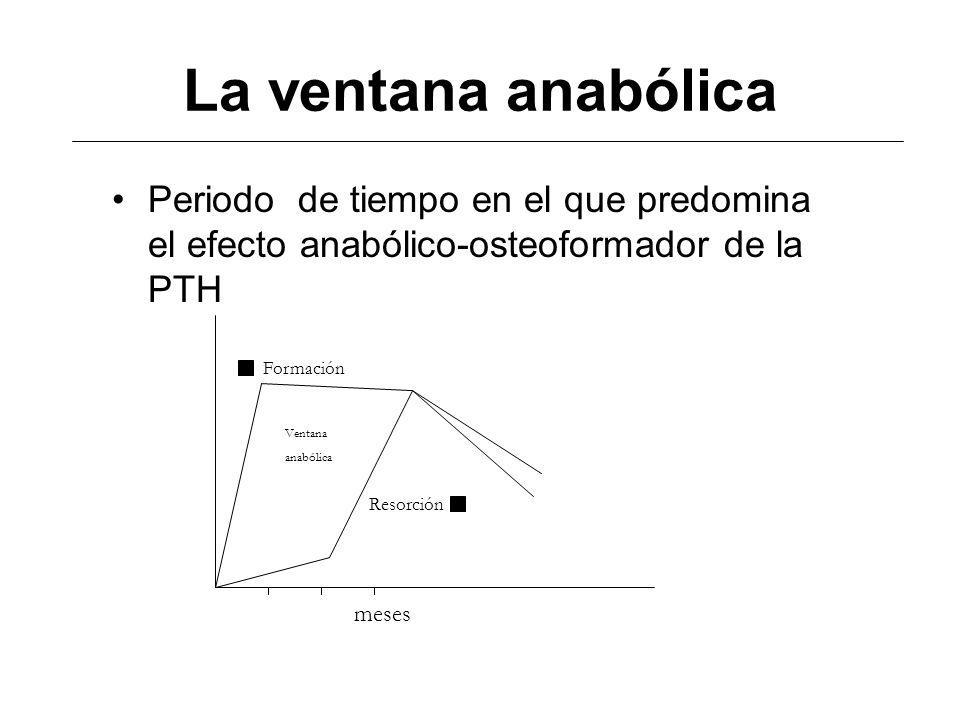 La ventana anabólica Periodo de tiempo en el que predomina el efecto anabólico-osteoformador de la PTH meses Formación Resorción Ventana anabólica