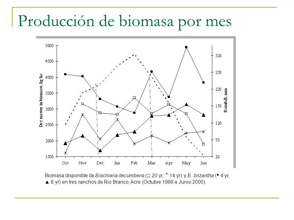 Producción de biomasa por mes Biomasa disponible de Brachiaria decumbens ( 20 yr, * 14 yr) y B. brizantha ( 4 yr, 8 yr) en tres ranchos de Rio Branco,