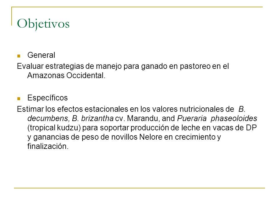 Objetivos General Evaluar estrategias de manejo para ganado en pastoreo en el Amazonas Occidental. Específicos Estimar los efectos estacionales en los