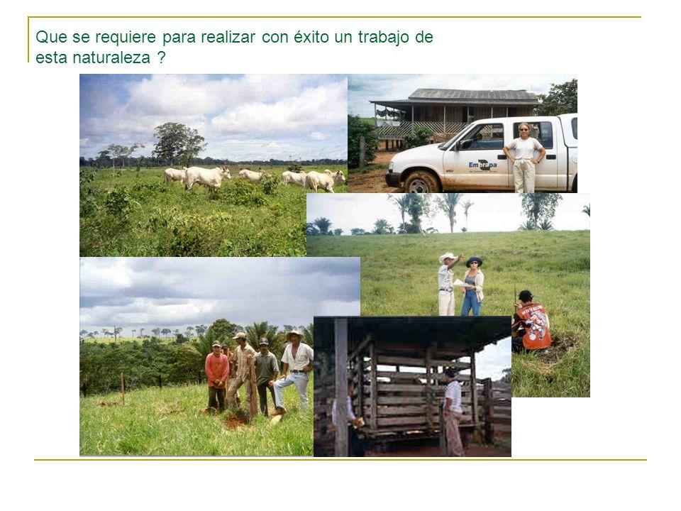 Ganancias de peso observadas Novillos en crecimiento en pastoreo de B.