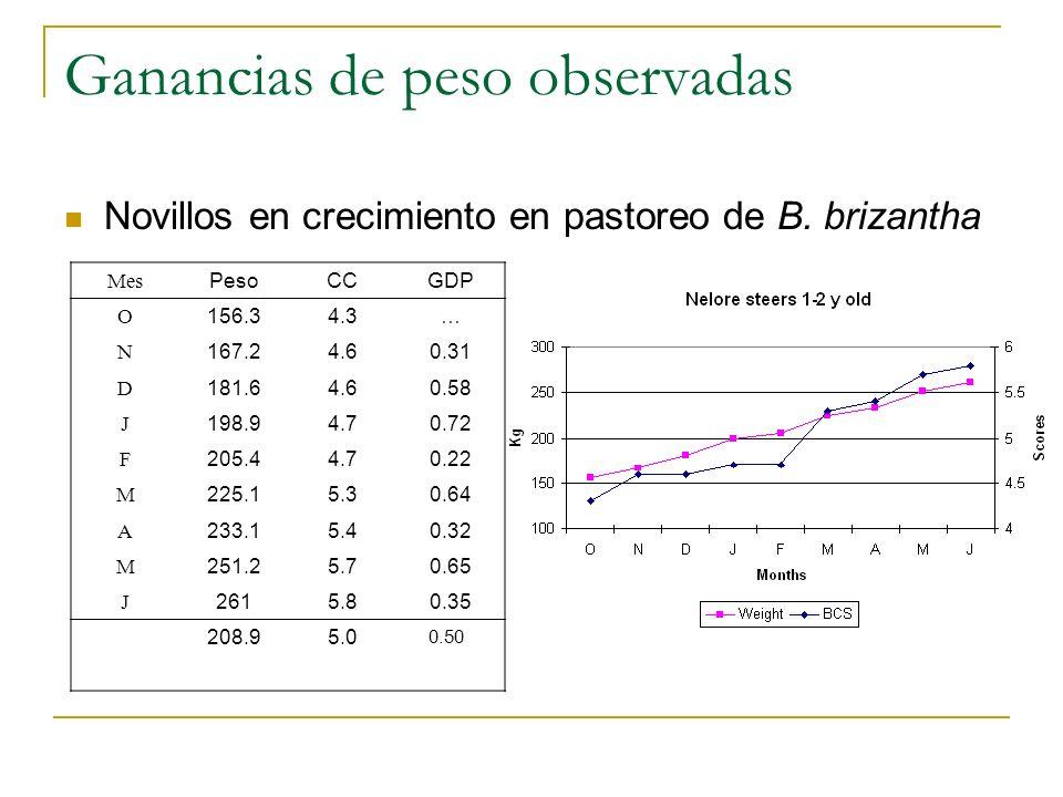 Ganancias de peso observadas Novillos en crecimiento en pastoreo de B. brizantha Mes PesoCCGDP O 156.34.3… N 167.24.60.31 D 181.64.60.58 J 198.94.70.7