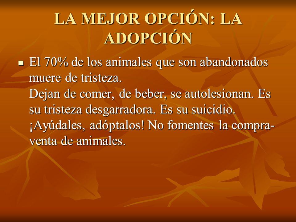 LA MEJOR OPCIÓN: LA ADOPCIÓN El 70% de los animales que son abandonados muere de tristeza.
