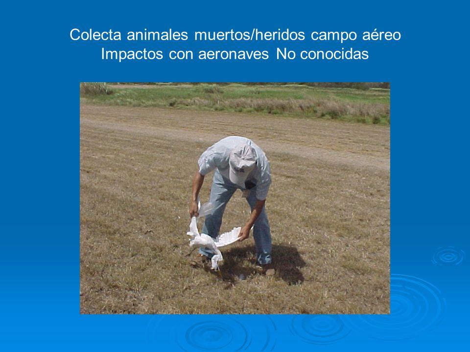 Nombres comunes, científicos (Orden/Familia/Género/Especie) y cantidad de impactos notificados entre aeronaves y la fauna silvestre en el período comp