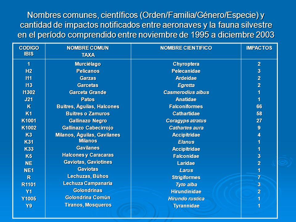 Nombres comunes, científicos (Orden/Familia/Género/Especie) y cantidad de impactos notificados entre aeronaves y la fauna silvestre en el período comprendido entre noviembre de 1995 a diciembre 2003 CODIGO IBIS NOMBRE COMUN TAXA NOMBRE CIENTIFICO IMPACTOS 1H2I11I13I1302J21KK1K1001K1002K3K31K33K5NENE1RR1101Y1Y1005Y9MurciélagoPelícanosGarzasGarcetas Garceta Grande Patos Buitres, Águilas, Halcones Buitres o Zamuros Gallinazo Negro Gallinazo Cabecirrojo Milanos, Águilas, Gavilanes Milanos Gavilanes Halcones y Caracaras Gaviotas, Gaviotines Gaviotas Lechuzas, Búhos Lechuza Campanaria Golondrinas Golondrina Común Tiranos, Mosqueros ChyropteraPelecanidaeArdeidaeEgretta Casmerodius albus AnatidaeFalconiformesCathartidae Coragyps atratus Cathartes aura AccipitridaeElanusAccipitridaeFalconidaeLaridaeLarusStrigiformes Tyto alba Hirundinidae Hirundo rustica Tyrannidae232211665827941132173211