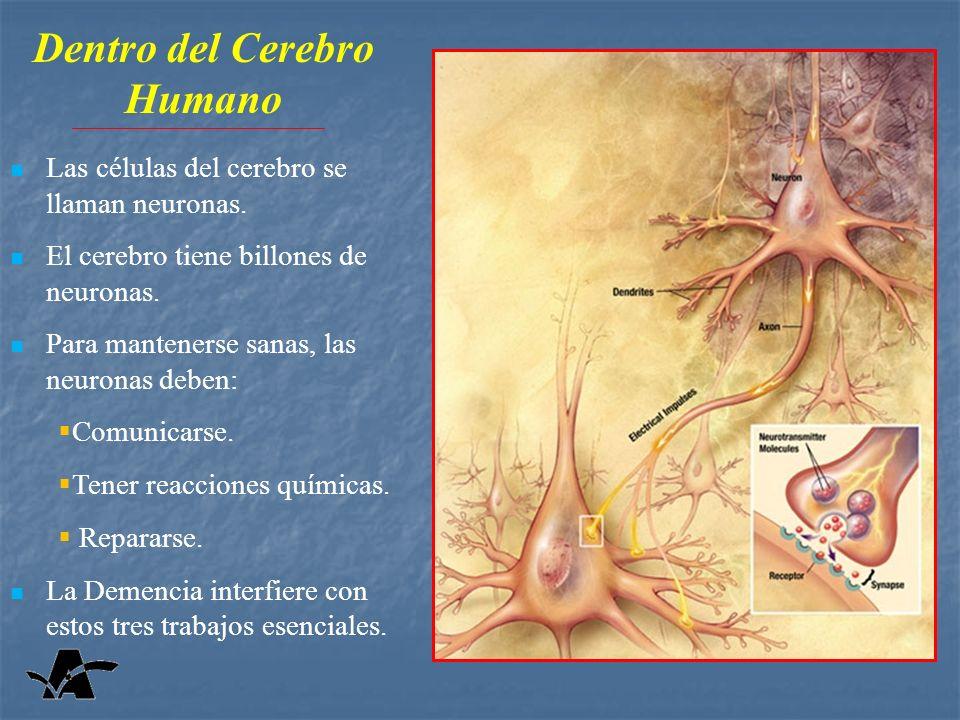 Las células del cerebro se llaman neuronas.El cerebro tiene billones de neuronas.