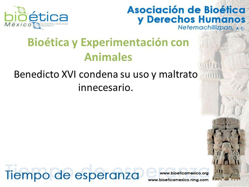 Bioética y Experimentación con Animales Benedicto XVI condena su uso y maltrato innecesario.