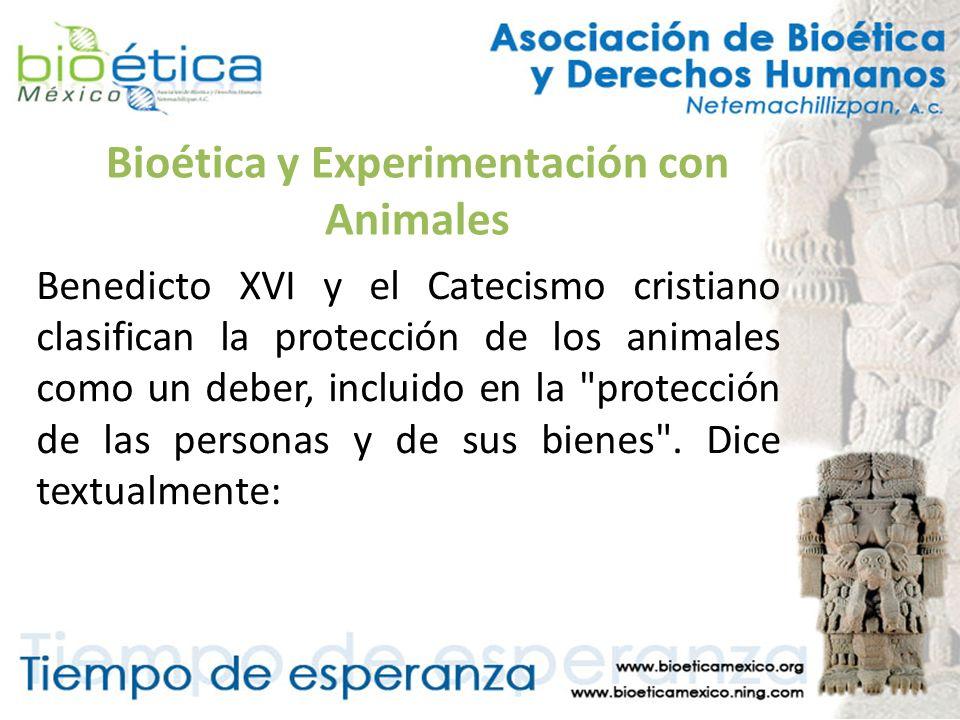 Bioética y Experimentación con Animales Benedicto XVI y el Catecismo cristiano clasifican la protección de los animales como un deber, incluido en la