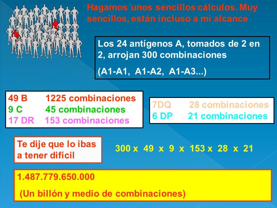 Hagamos unos sencillos cálculos. Muy sencillos, están incluso a mi alcance Los 24 antígenos A, tomados de 2 en 2, arrojan 300 combinaciones (A1-A1, A1
