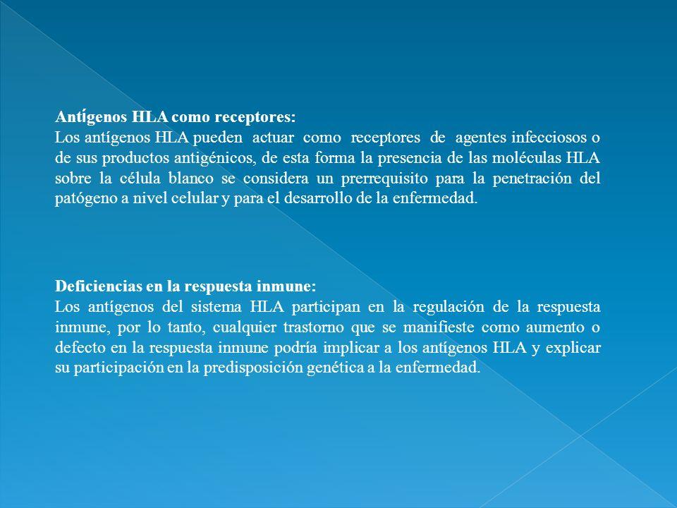 Ant í genos HLA como receptores: Los antígenos HLA pueden actuar como receptores de agentes infecciosos o de sus productos antigénicos, de esta forma