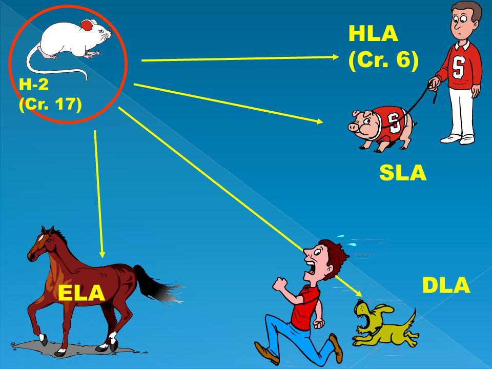 H-2 (Cr. 17) HLA (Cr. 6) SLA ELA DLA