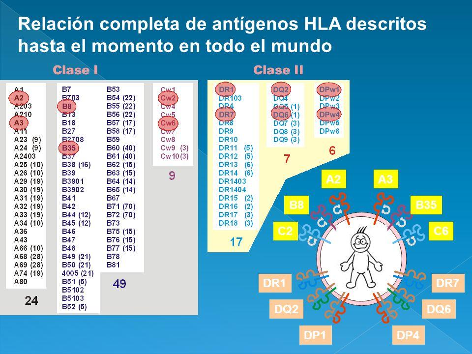 Relación completa de antígenos HLA descritos hasta el momento en todo el mundo A2A3 B8B35 C2C6 DR1DR7 DQ2DQ6 DP1DP4