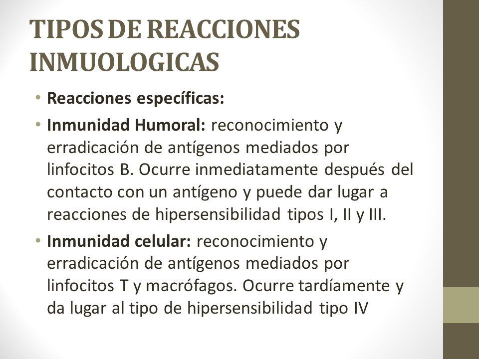 TIPOS DE REACCIONES INMUOLOGICAS Reacciones específicas: Inmunidad Humoral: reconocimiento y erradicación de antígenos mediados por linfocitos B.