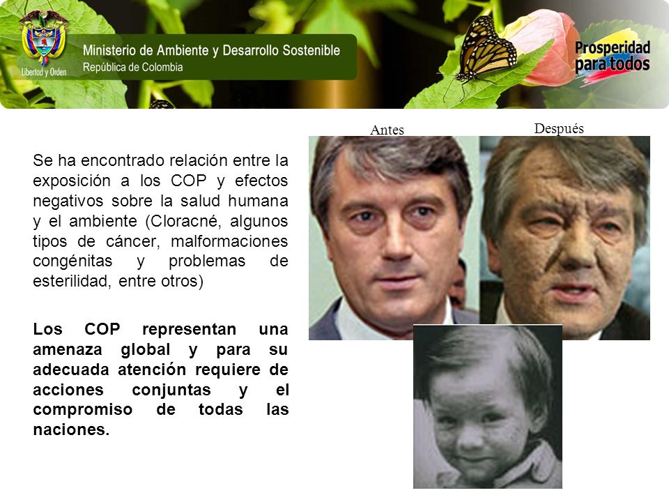 Se ha encontrado relación entre la exposición a los COP y efectos negativos sobre la salud humana y el ambiente (Cloracné, algunos tipos de cáncer, ma