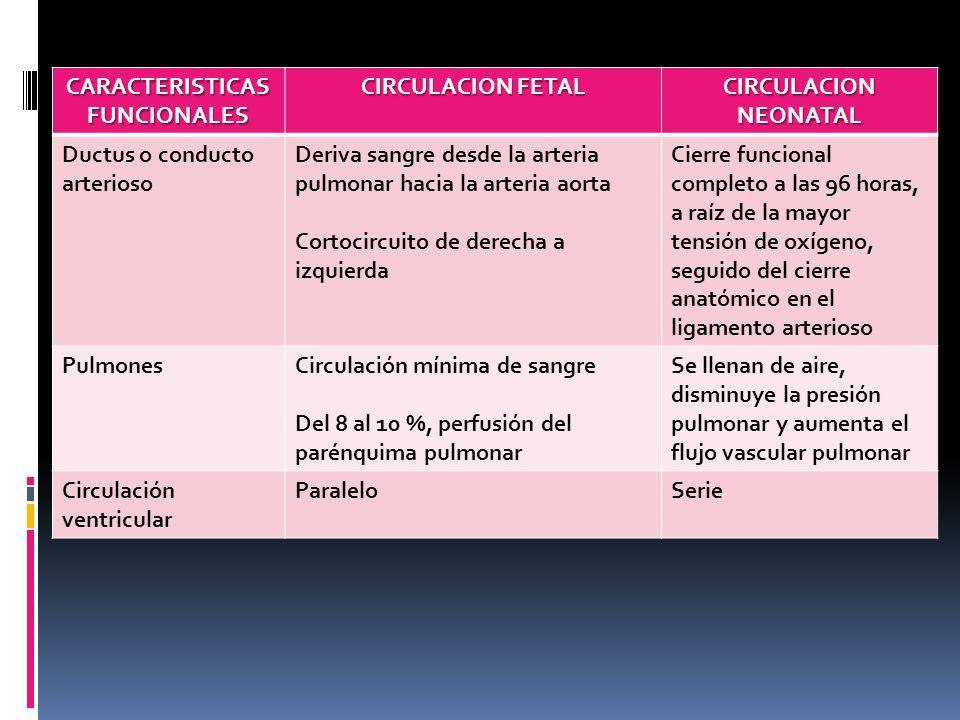 CARACTERISTICAS FUNCIONALES CIRCULACION FETAL CIRCULACION NEONATAL Ductus o conducto arterioso Deriva sangre desde la arteria pulmonar hacia la arteri