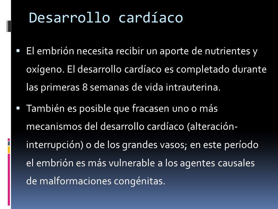 Desarrollo cardíaco El embrión necesita recibir un aporte de nutrientes y oxígeno. El desarrollo cardíaco es completado durante las primeras 8 semanas