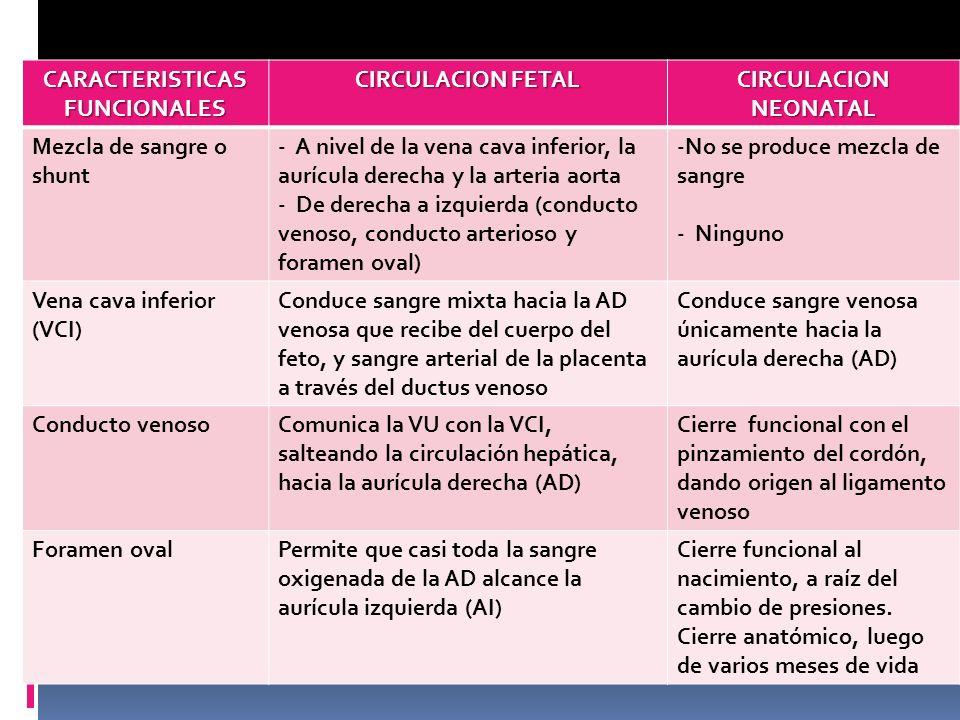 CARACTERISTICAS FUNCIONALES CIRCULACION FETAL CIRCULACION NEONATAL Mezcla de sangre o shunt - A nivel de la vena cava inferior, la aurícula derecha y