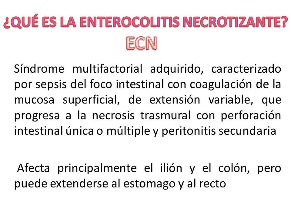 Síndrome multifactorial adquirido, caracterizado por sepsis del foco intestinal con coagulación de la mucosa superficial, de extensión variable, que p
