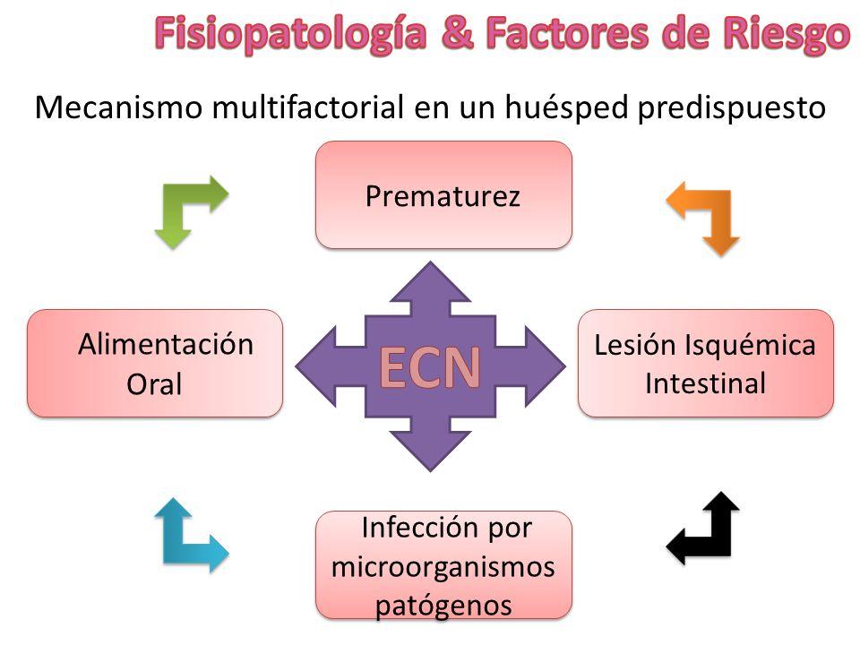 Mecanismo multifactorial en un huésped predispuesto Prematurez Infección por microorganismos patógenos Alimentación Oral Lesión Isquémica Intestinal