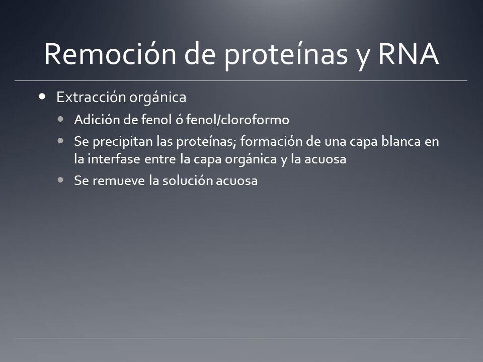 Remoción de proteínas y RNA Extracción orgánica Adición de fenol ó fenol/cloroformo Se precipitan las proteínas; formación de una capa blanca en la in