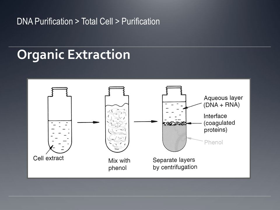 Organic Extraction DNA Purification > Total Cell > Purification