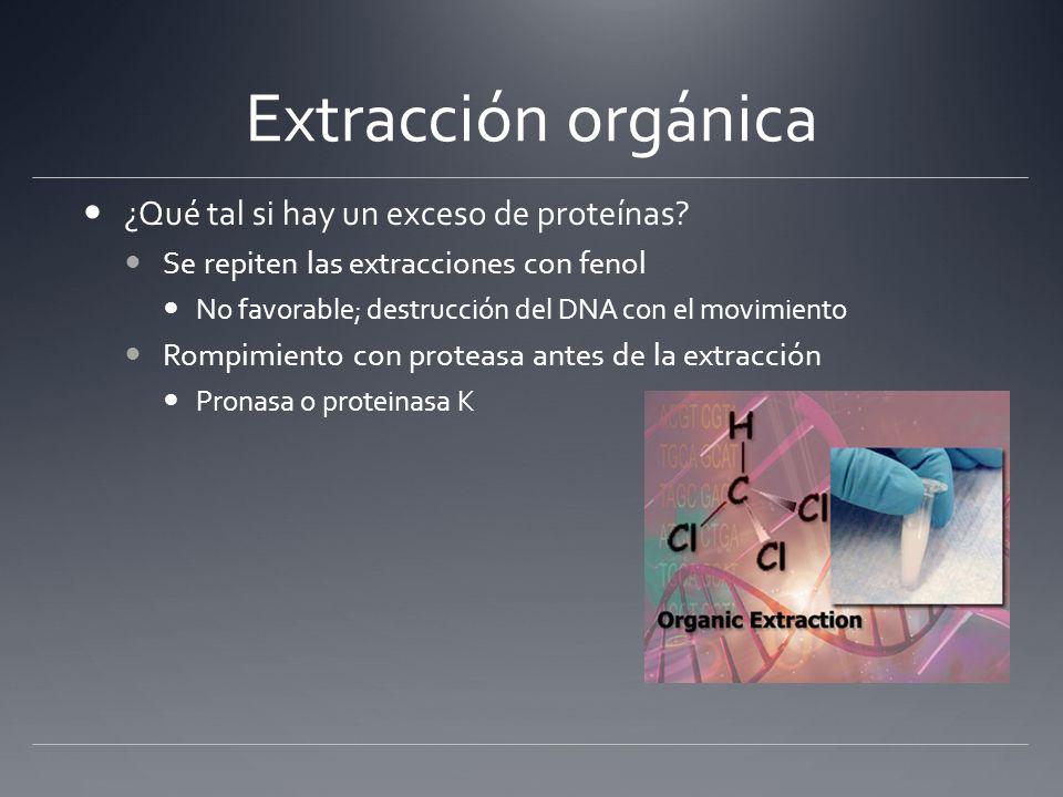 Extracción orgánica ¿Qué tal si hay un exceso de proteínas? Se repiten las extracciones con fenol No favorable; destrucción del DNA con el movimiento