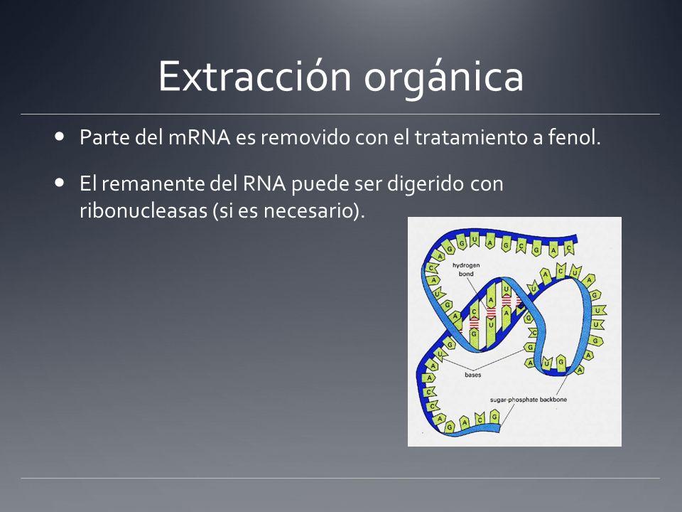 Extracción orgánica Parte del mRNA es removido con el tratamiento a fenol. El remanente del RNA puede ser digerido con ribonucleasas (si es necesario)
