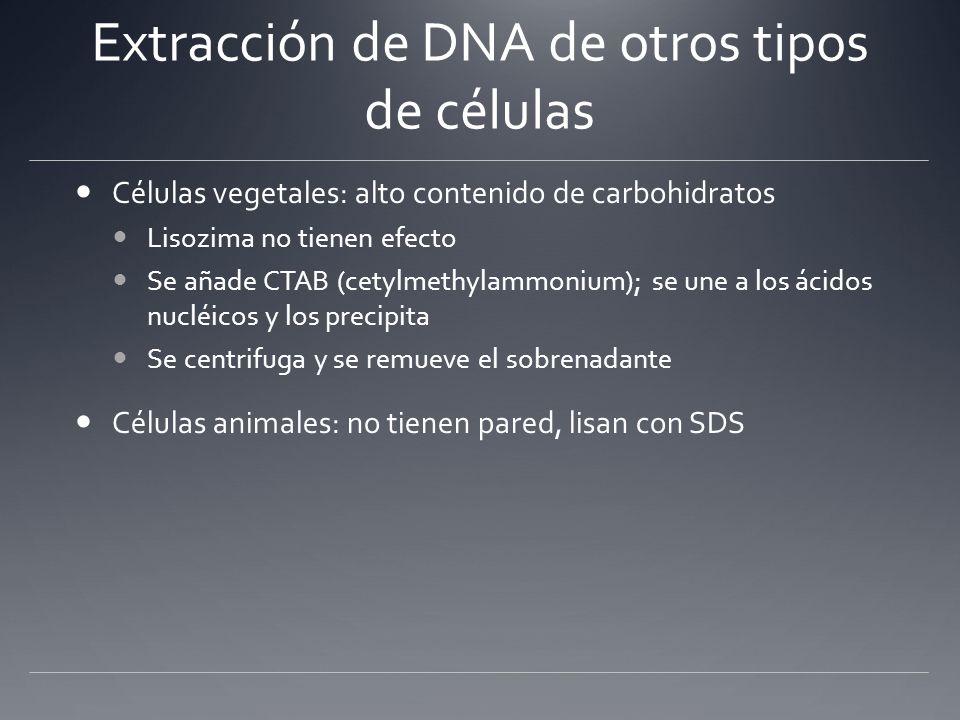 Extracción de DNA de otros tipos de células Células vegetales: alto contenido de carbohidratos Lisozima no tienen efecto Se añade CTAB (cetylmethylamm