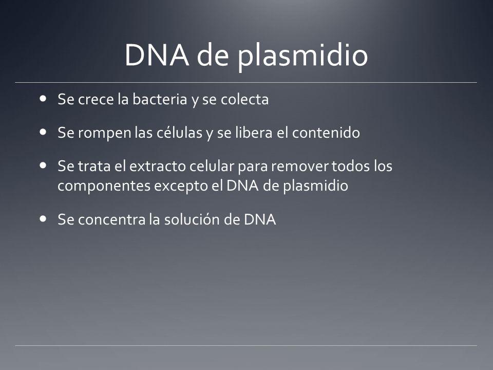DNA de plasmidio Se crece la bacteria y se colecta Se rompen las células y se libera el contenido Se trata el extracto celular para remover todos los
