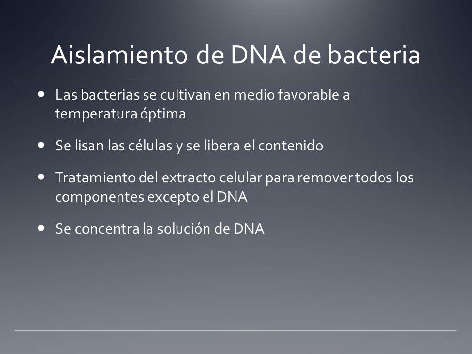 Aislamiento de DNA de bacteria Las bacterias se cultivan en medio favorable a temperatura óptima Se lisan las células y se libera el contenido Tratami