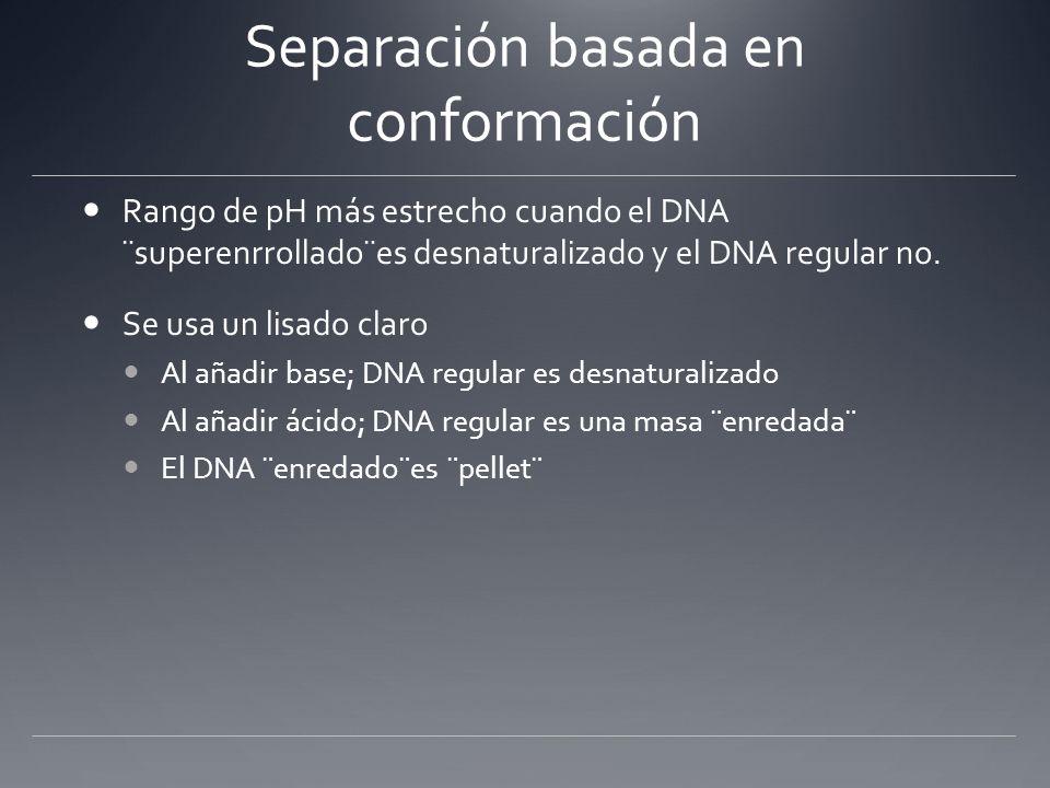 Separación basada en conformación Rango de pH más estrecho cuando el DNA ¨superenrrollado¨es desnaturalizado y el DNA regular no. Se usa un lisado cla