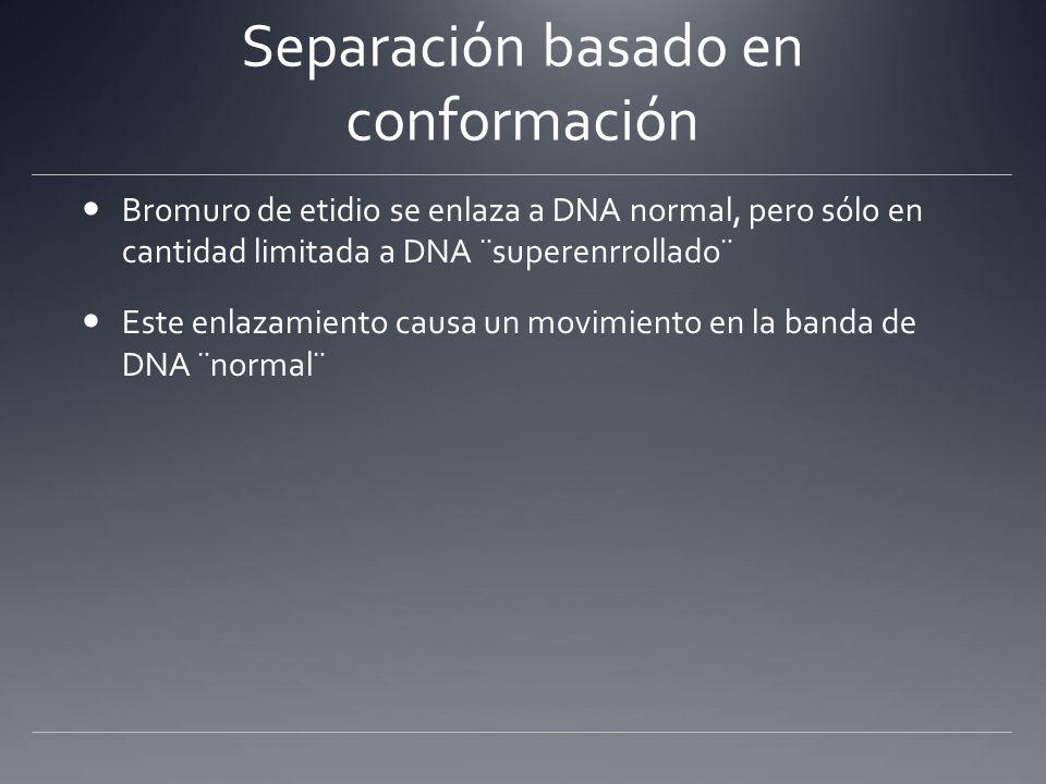 Separación basado en conformación Bromuro de etidio se enlaza a DNA normal, pero sólo en cantidad limitada a DNA ¨superenrrollado¨ Este enlazamiento c