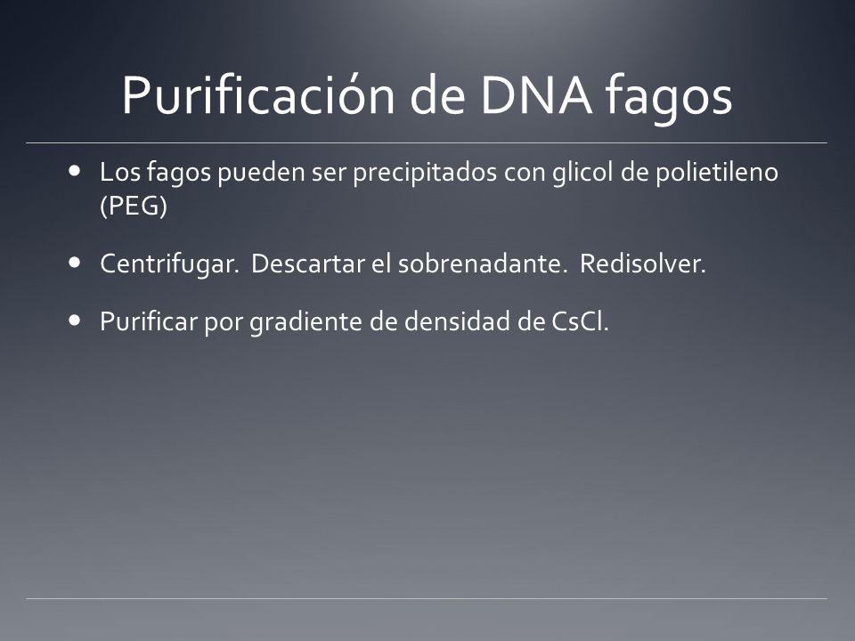 Purificación de DNA fagos Los fagos pueden ser precipitados con glicol de polietileno (PEG) Centrifugar. Descartar el sobrenadante. Redisolver. Purifi
