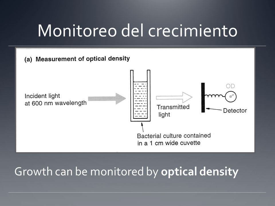 Growth can be monitored by optical density Monitoreo del crecimiento