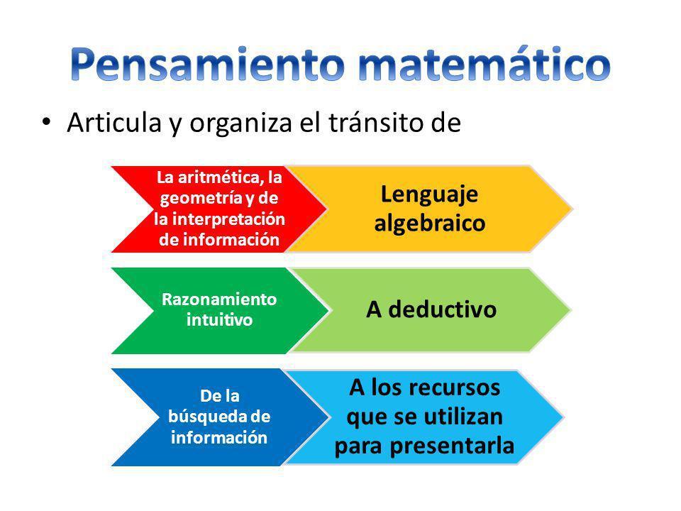 Articula y organiza el tránsito de La aritmética, la geometría y de la interpretación de información Lenguaje algebraico Razonamiento intuitivo A dedu