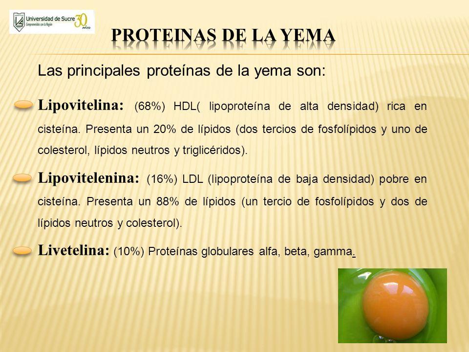 Las principales proteínas de la yema son: Lipovitelina: (68%) HDL( lipoproteína de alta densidad) rica en cisteína. Presenta un 20% de lípidos (dos te