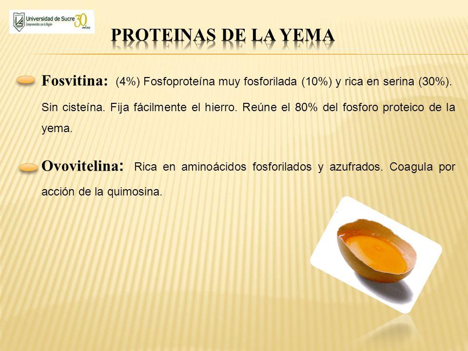 Fosvitina: (4%) Fosfoproteína muy fosforilada (10%) y rica en serina (30%). Sin cisteína. Fija fácilmente el hierro. Reúne el 80% del fosforo proteico