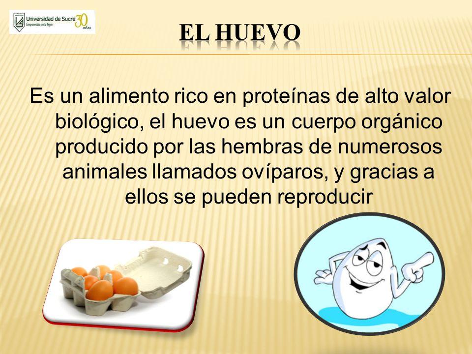 Es un alimento rico en proteínas de alto valor biológico, el huevo es un cuerpo orgánico producido por las hembras de numerosos animales llamados ovíp